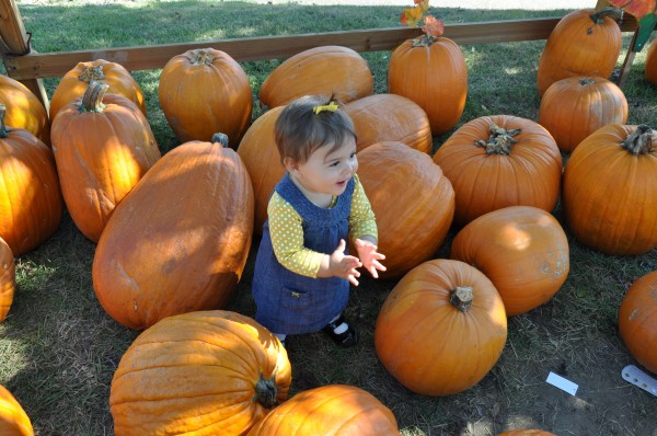 Our punkin surrounded by pumpkins